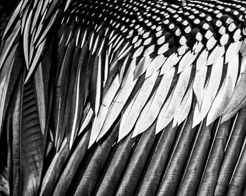 Advanced-Monochrome-2nd-Feathers-TawniBlamble