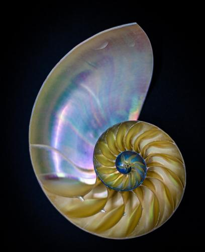 Advanced-Color-Honorable Mention-The Nautilus Spiral-Gary Bowlick