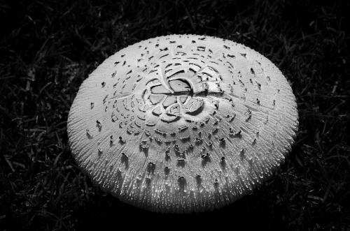Advanced-Monochrome-1st-Alien Mushroom-Janet Newton