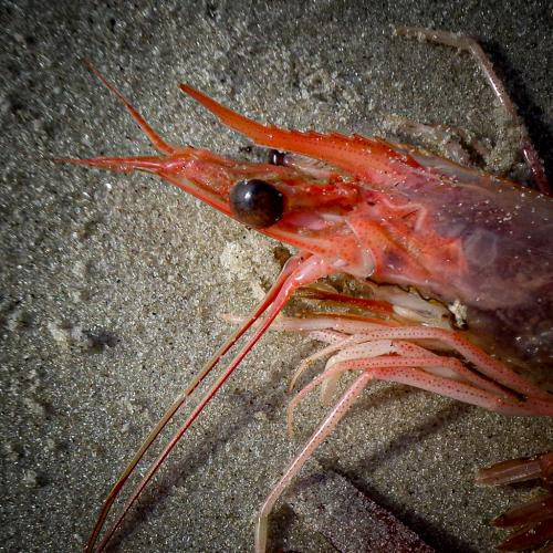 Advanced-Color-3rd-Are You Calling Me A Shrimp-DonnaTaylor