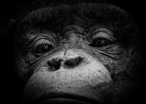 Advanced-Monochrome-3rd-Monkey See Monkey Do-DonnaTaylor