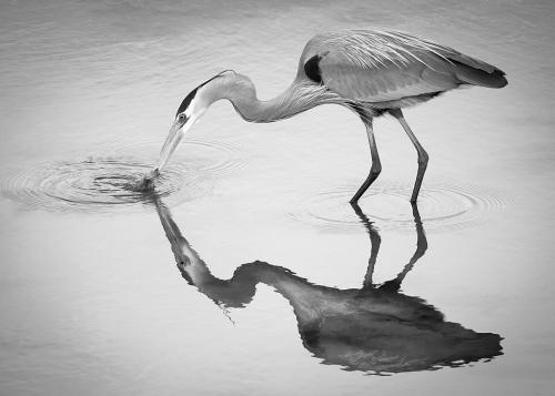 Advanced-Monochrome-2nd-To the Point-Janet Newton