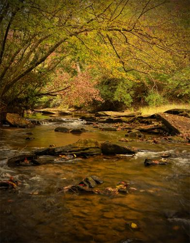 Mobley Creek Autumn