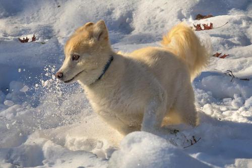 Maddie Loves Snow