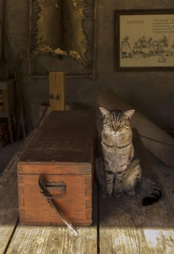 Jim Johns-Barn Cat