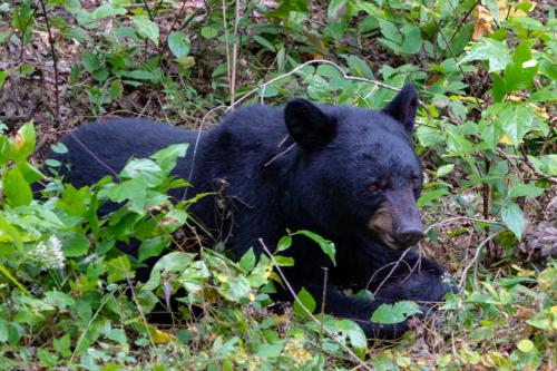 DonnaTaylor-Just Your Average Bear