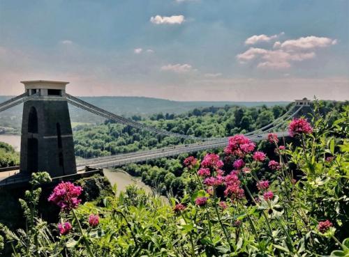 Novice-Spring Bridge-QuintHill