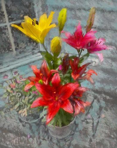 BloomingInTheTimeOfCorona-StellaSpyrou
