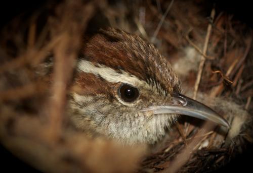 Nesting Momma-Dee Dee Brown