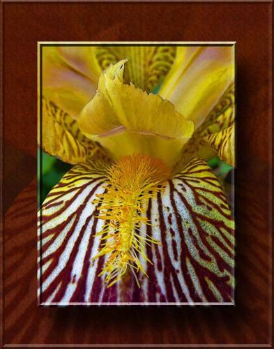 Stella Spyrou-Beauty In Yellow